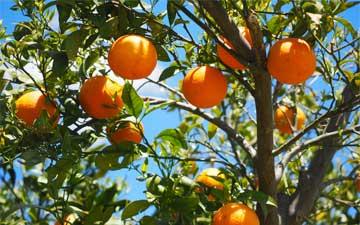 Small Tree Planting service orange county